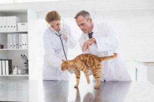 Bild Tierarzt #1
