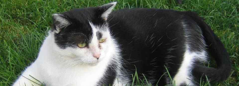 Die 10 häufigsten Katzenkrankheiten