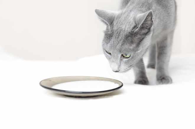 Bild Katze beim trinken