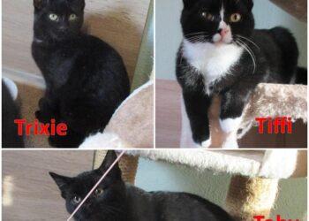 Trixie & Tiffi & Toby suchen eine neue Heimat