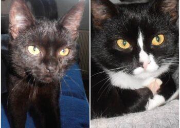 Trixie und Tiffi warten immer noch auf neue Dosi's